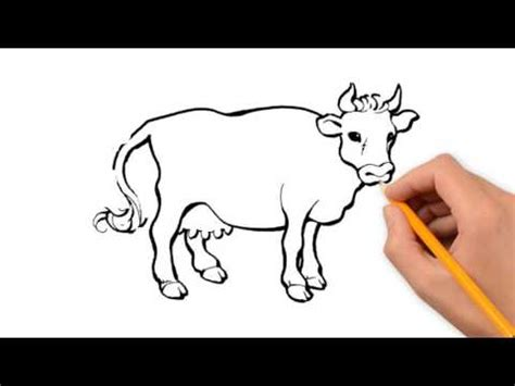 animals pencil  draw step  step youtube