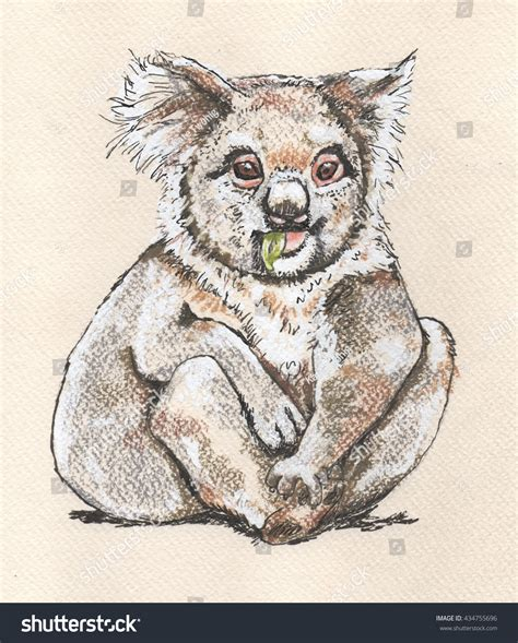 koala seated adult marsupial native animal stock
