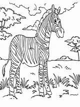 Rainforest Dschungeltiere Coloring Zebra Animals Ausmalbilder Malvorlagen Konabeun Animal Drawing Drucken Zum Kinder Colornimbus 收藏自 sketch template