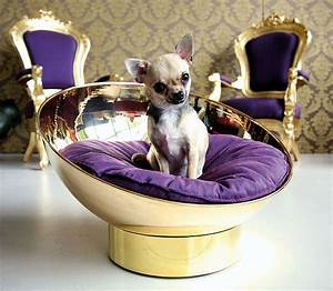 33 best images about things for the furbabies on for Extravagant dog beds