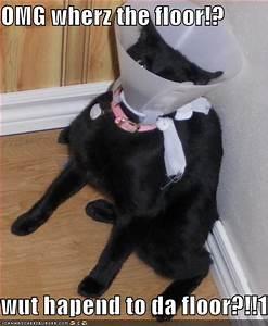 Funny cat pictures, funny cat photos, funny cat pictures ...