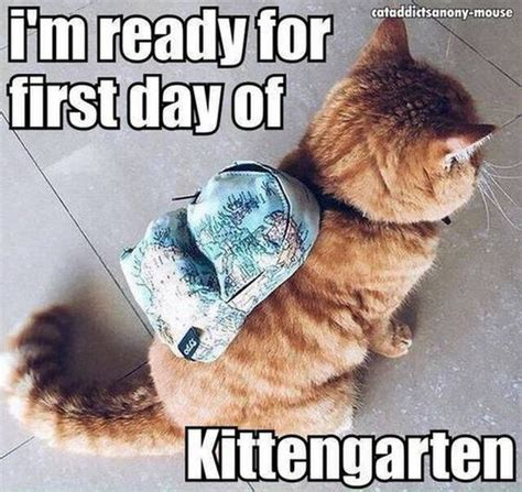 Meme Kitten - best 25 cats ideas on pinterest kitty cats kitty and cute kitty cats