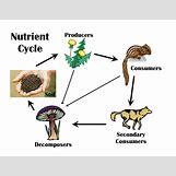 How Food Fuels Cellular Respiration Flow Chart   1056 x 816 png 233kB