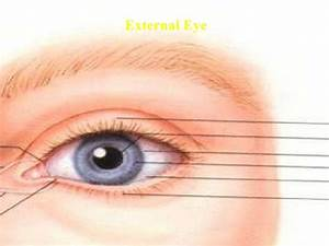 Lecture4 Subjective And Objective Eye Exam