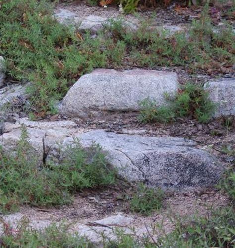 landscape erosion erosion control for a hillside or garden slope garden pinterest gardens landscapes and rocks