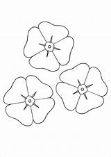 Template Poppy Coloring Flower Printable Colouring Templates Poppies Remembrance Sheets Pdf Flowers Anzac Craft Colour Sheet Drawing Clipart Activities Veterans sketch template