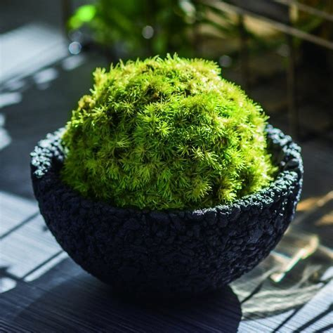 Eco Pochi Kokedama Moss Ball Pot   The Green Head