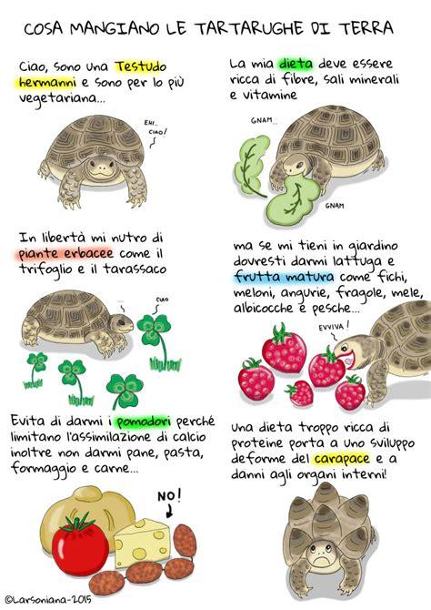 tartarughe alimentazione cosa mangia la tartaruga di terra larsoniana s pet