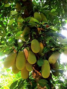 Jackfruit High Quality Wallpapers Free Download ...
