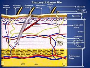 Subhaditya InfoWorld: Other Sense Organs of Human Body ...