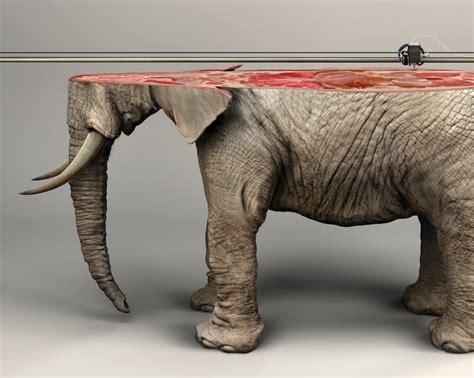 utrotningshotade djur uppmaerksammas  reklamkampanj
