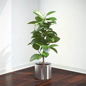 Ficus Elastica - VIZPARK™