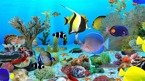 Free Animated Fish Wallpaper Windows 7 - maintenance free fish tank wallpaper for windows 7 2017