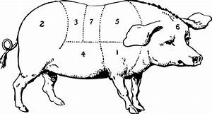 Labeled Pig Drawing Clip Art At Clker Com