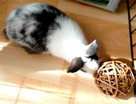 jouet pour lapin nain