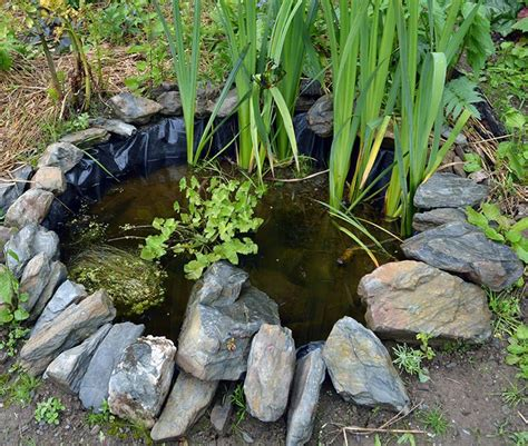 how to build a small pond in your backyard building a wildlife pond in the vegetable garden lovely
