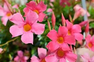 Distributeur D Eau Pour Plante : conomies d 39 eau des plantes en pot qui se passent d 39 arrosage ~ Dode.kayakingforconservation.com Idées de Décoration