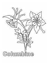 Coloring Columbine Pages Flowers Flower Recommended sketch template