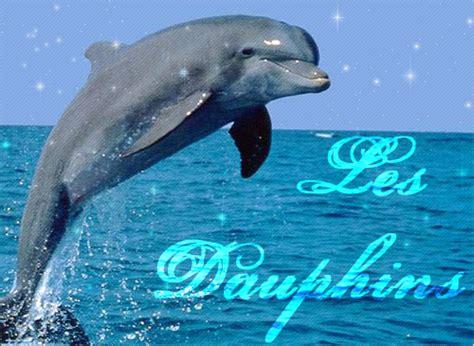 uncategorized mes amis les dauphins page 2