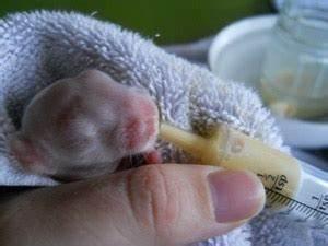 Newborn Rabbits Feeding