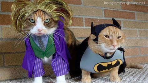 How Your Kitty Feels About Cute Pet Costumes  Funny Cats