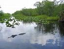 El Parque Nacional de los Everglades en Florida