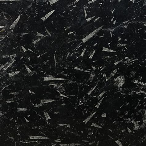 fossil black polished marble slab random