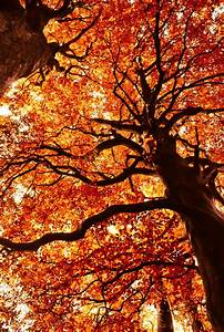Autumn Tree Pictures, Photos, and Images for Facebook ...