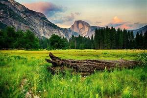 Usa, Parks, Mountains, Forests, Scenery, Yosemite, Grass, Nature, Wallpapers, Hd, Desktop, And
