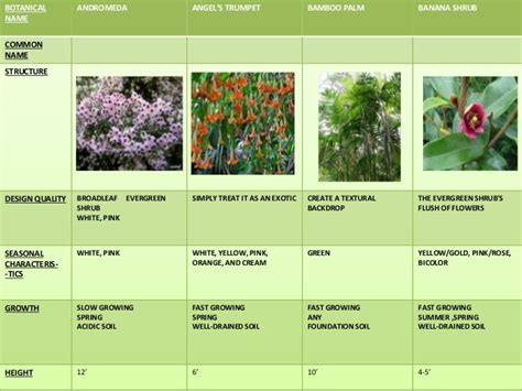 name of shrub landscape types plants tree shrubs