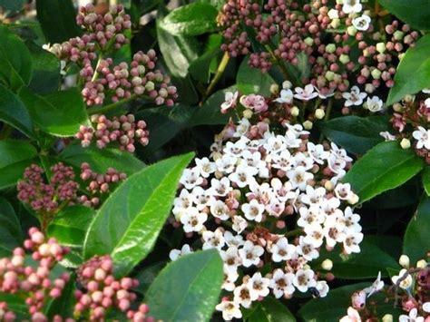 fiori perenni resistenti al gelo quali sono i fiori perenni resistenti al gelo villegiardini