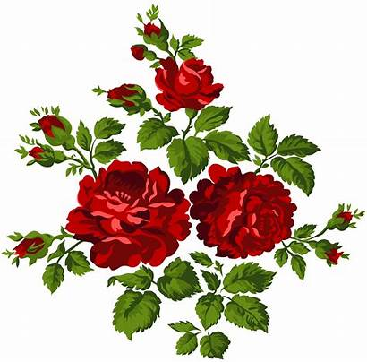 Clip Roses Rose Clipart Transparent Yopriceville Border