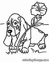 Hound Basset Coloring Pages Drawing Puppy Dog Fox Flower Template Drawings 1000px 2kb Getdrawings Popular sketch template