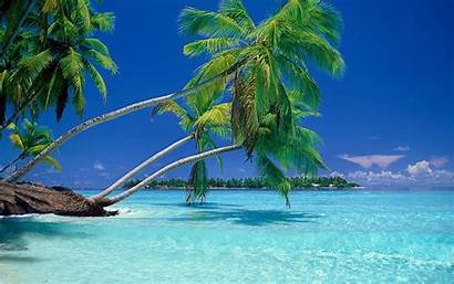Palm Trees Tropical Water Landscape Sea Nature
