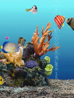 Animated Fish Aquarium Wallpaper Mobile - animated aquarium mobile phone wallpapers 240x320 hd