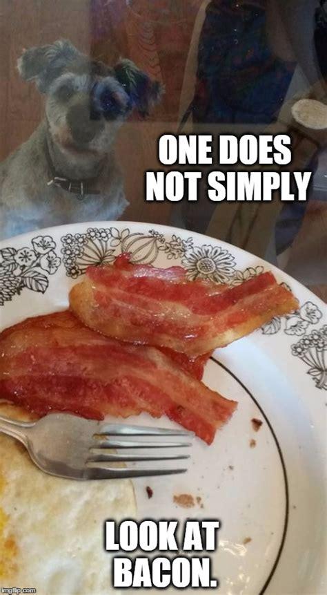 Dog Bacon Meme - bacon dog imgflip