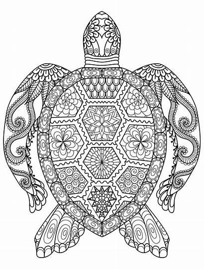 Coloring Pages Turtle Mandala Animal Printable Adult