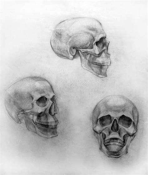 academic drawing pencil skull stock illustration image