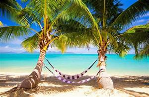 tropical sea paradise summer palms