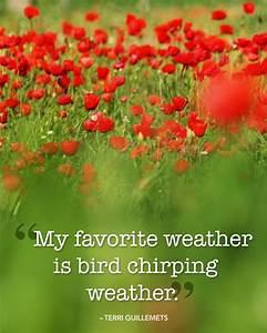25 Beautiful Qu... Chirp Quotes