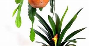 Grünpflanzen Für Dunkle Räume : pflanzendeko dekoration und dekorieren mit pflanzen ~ Michelbontemps.com Haus und Dekorationen