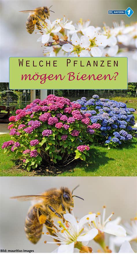 welche pflanzen mö bienen nicht welche pflanzen m 246 bienen tipps f 252 r bienenweiden und co garteln umweltfreundlich und
