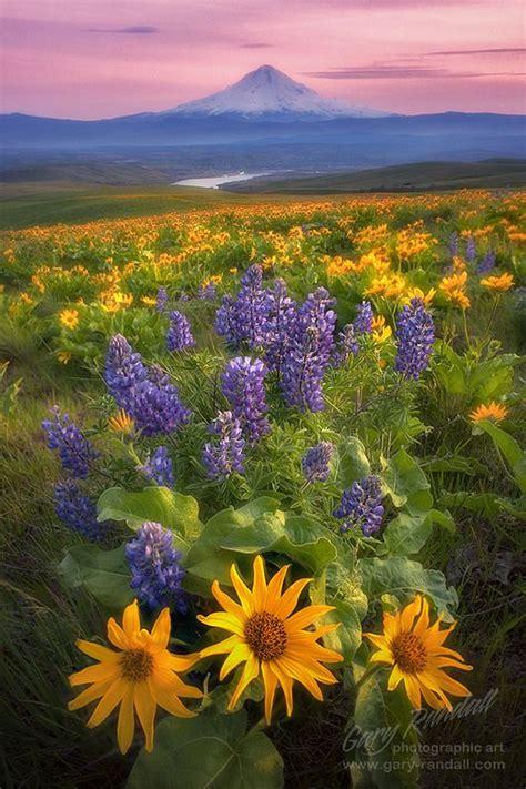 columbia hills springtime  gary randall dalles