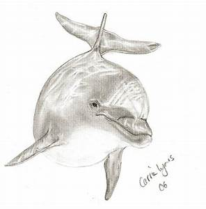 Another Dolphin Drawing by carriephlyons on DeviantArt