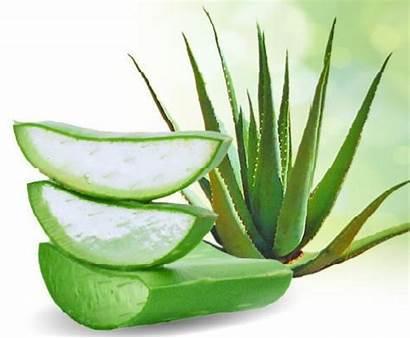 Lichen Rash Planus Aloe Vera Itchy Remedies