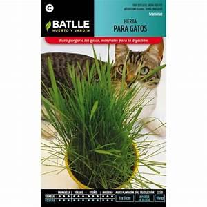 Graine Herbe A Chat : graines d 39 herbe chat par 1 50 sur planeta huerto ~ Melissatoandfro.com Idées de Décoration