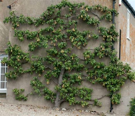 Deko Obst Garten by Spalierobst Im Garten Haus Fassade Deko Nutzpflanze Tipps