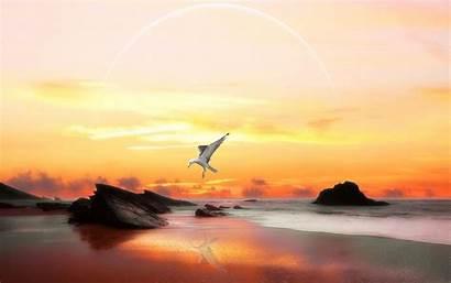 Freedom Wallpapers Animal Desktop Wallpaperesque Seagulls Flying
