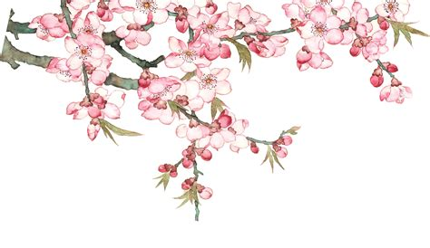 Watercolor Blossom Tree Png & Free Watercolor Blossom Tree
