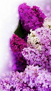 Purple, Flowers, Background, For, Android